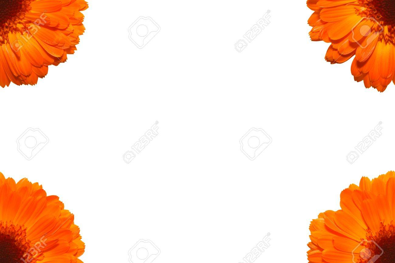 Marigold frame consisting of 4 parts of the flowers on a white marigold frame consisting of 4 parts of the flowers on a white background stock photo izmirmasajfo