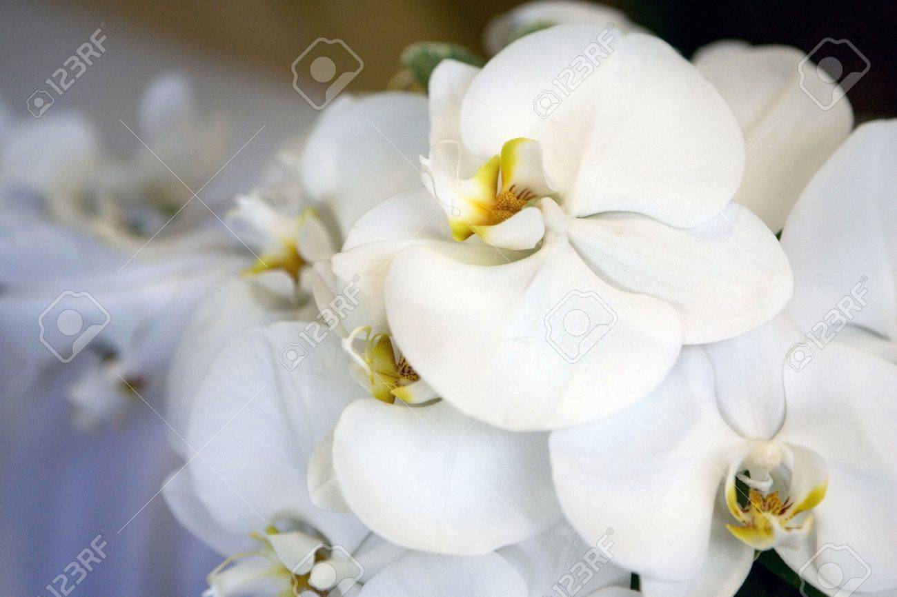 White Orchid Wedding Bouquet Stock Photo Picture And Royalty Free
