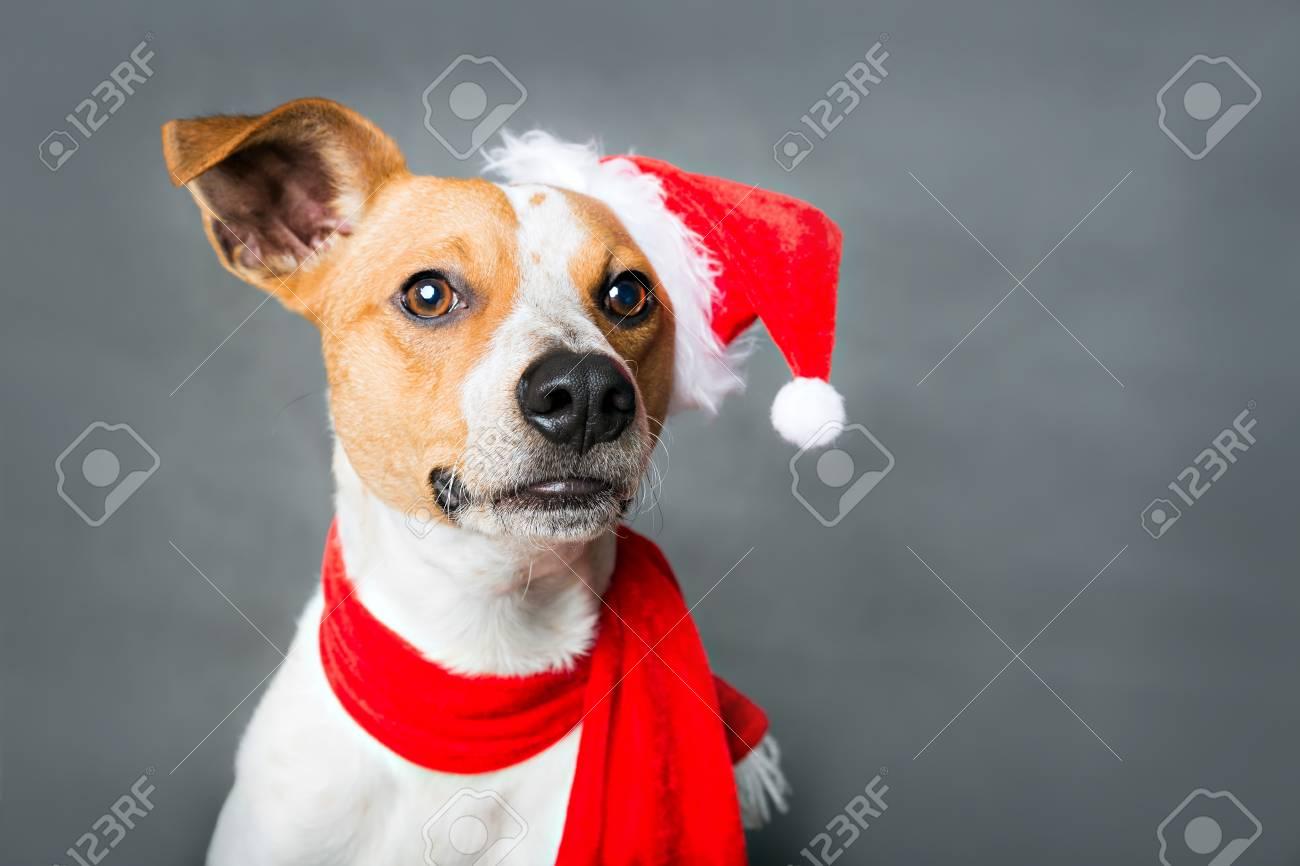 Porträt Von Lustigem Weihnachtshund Lizenzfreie Fotos, Bilder Und ...