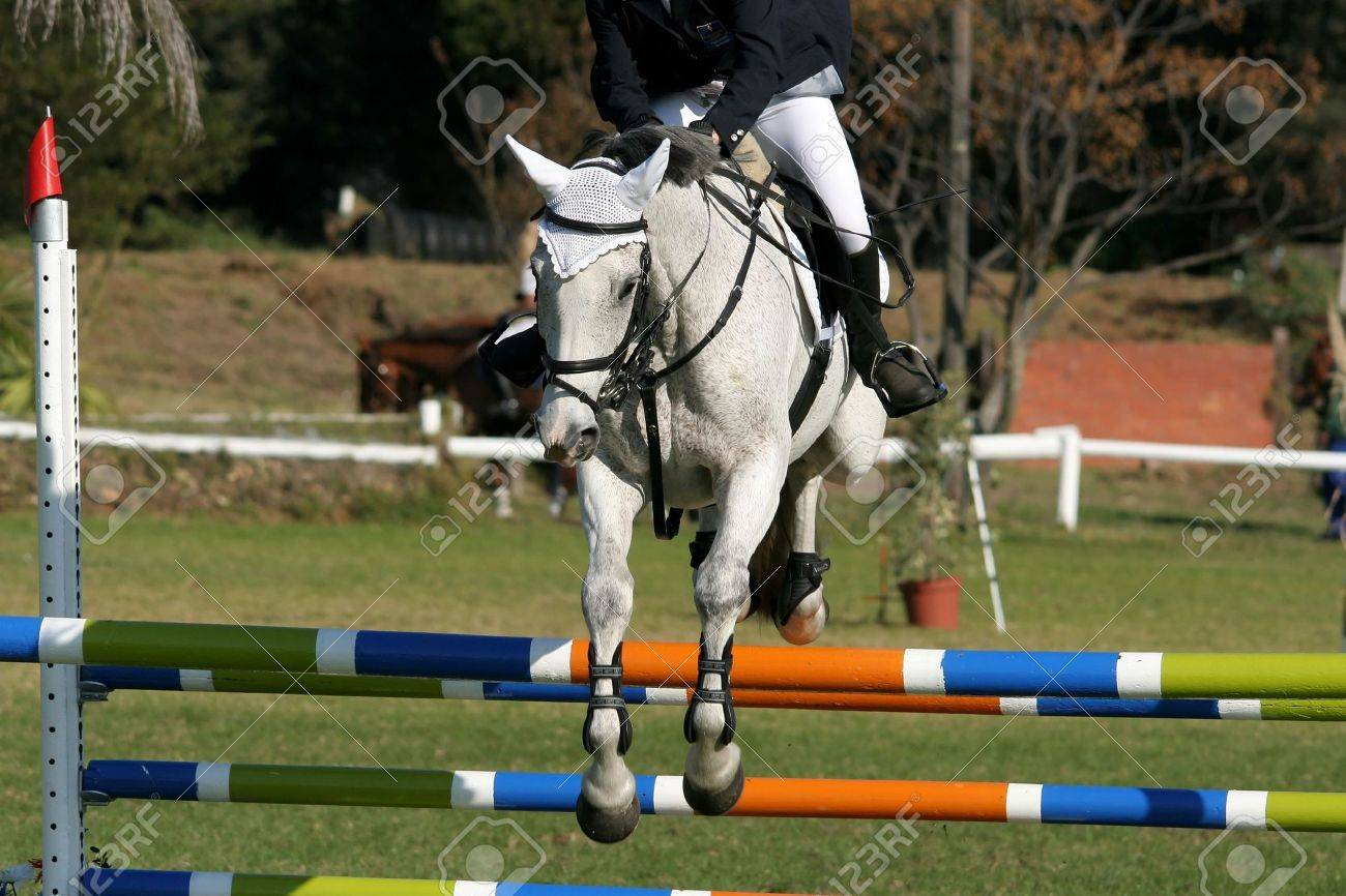 Beautiful White Horse Jumping Over A Hurdle In A Show Jumping Stock Photo Picture And Royalty Free Image Image 3266387