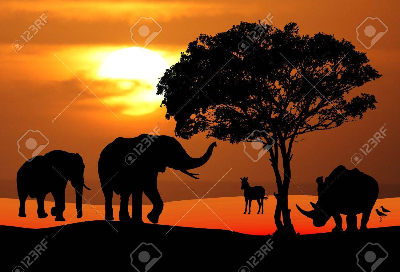 Wildlife Stock Photography African wildlife silhouetted