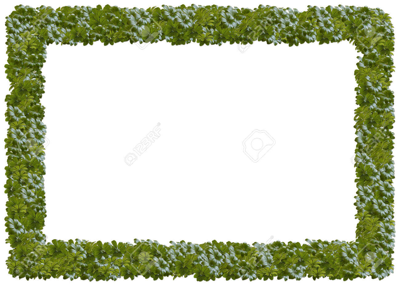 Umbrella Plants Frame. From The Floral Frames Series Stock Photo ...