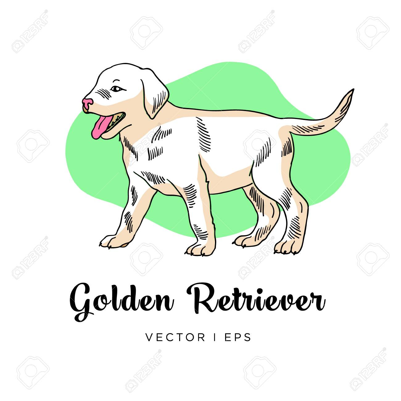 Vector Editable Sketch Of A Golden Retriever Puppy Dog Isolated Royalty Free Cliparts Vectors And Stock Illustration Image 110301938