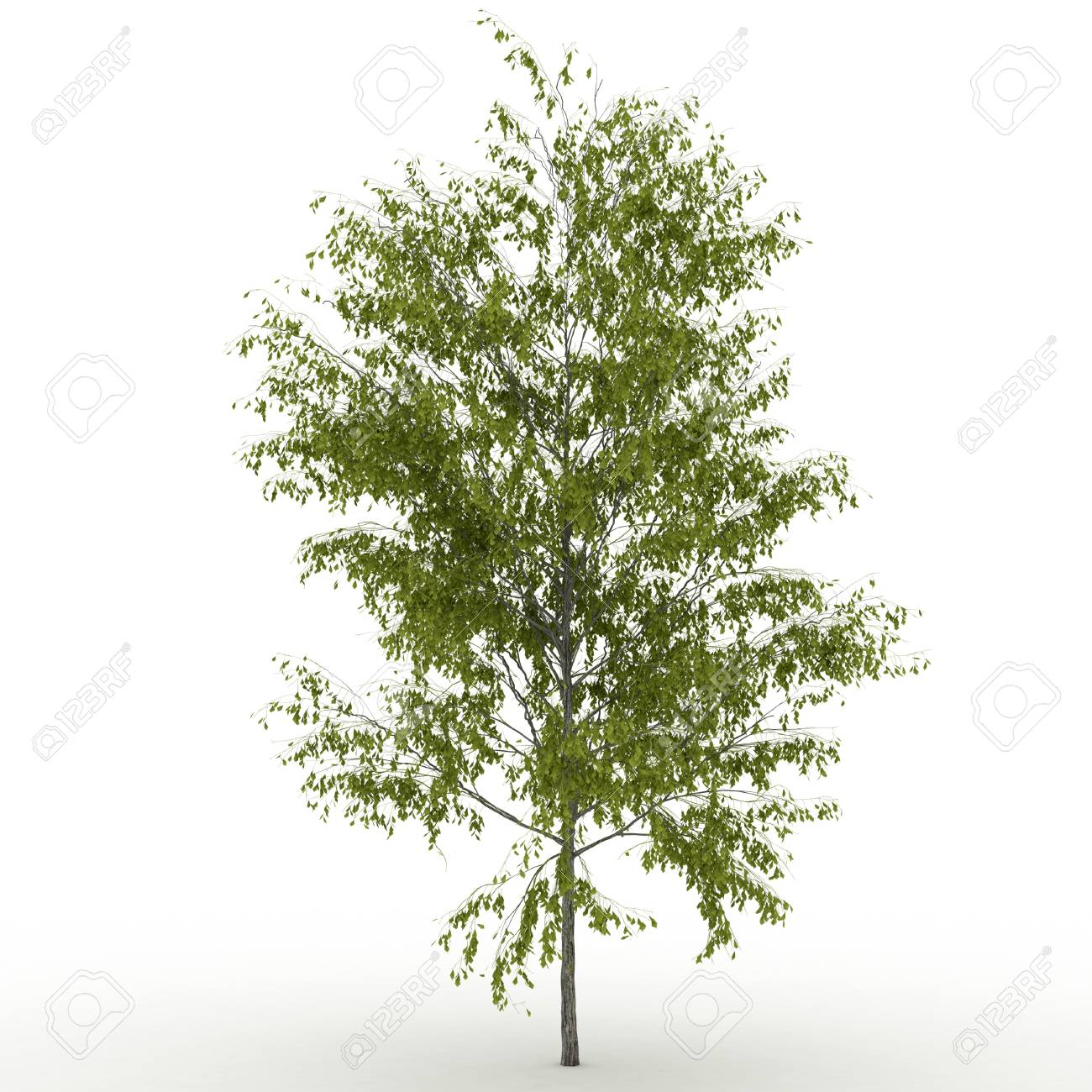 Isolated summer tree with  foliage Stock Photo - 17681852