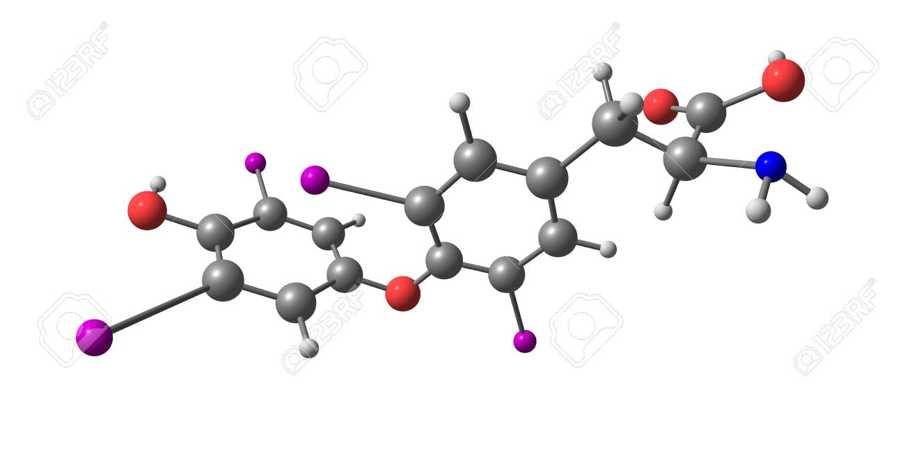 Levothyroxine Or L Thyroxine Is A Manufactured Form Of The Thyroid Stock Photo Picture And Royalty Free Image