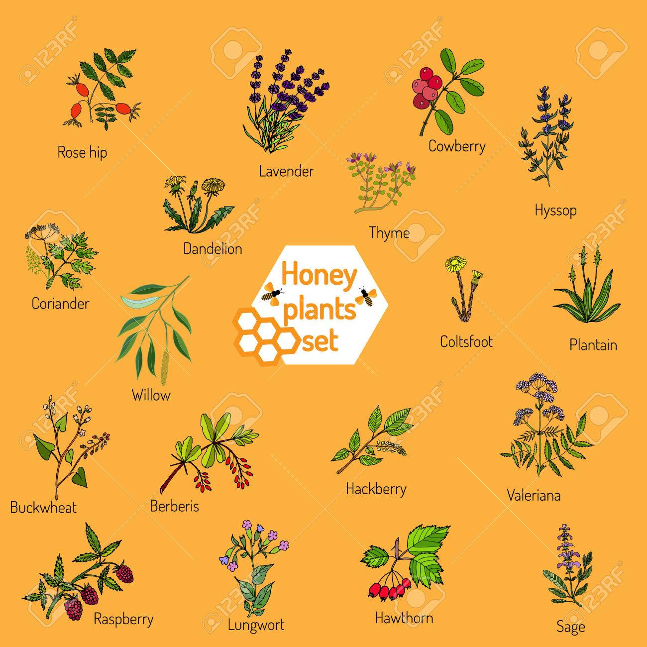 Image source plantsam com - Plants Nectar Sources For Honey Bees Vector Set Stock Vector 64081983