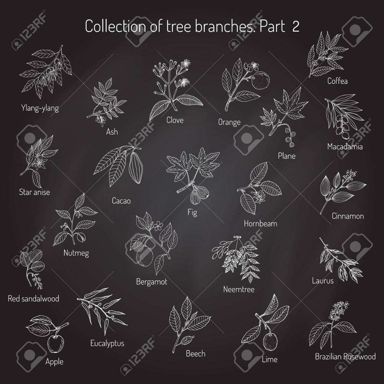 別の木の枝のセットです。手描きの背景イラスト ロイヤリティフリー