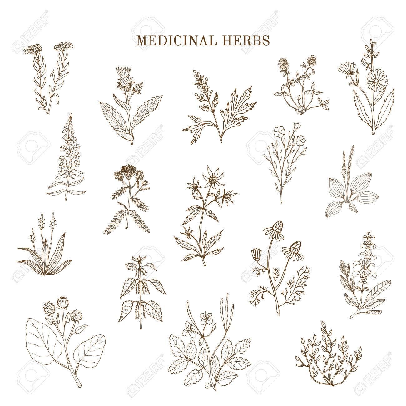 メディカル ハーブのヴィンテージ コレクション手描き植物イラスト