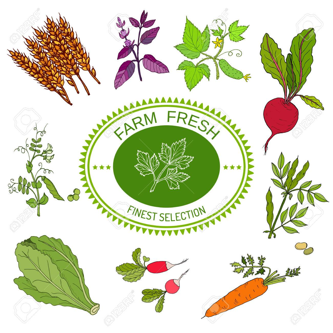 Farmers food market design, logo and vegetables  Hand drawn illustration