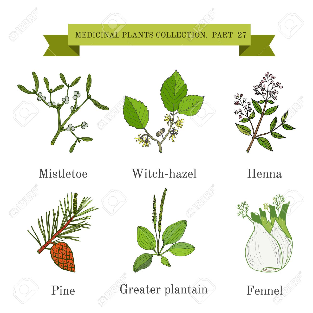 Vintage Collection Of Hand Drawn Medical Herbs And Plants Mistletoe