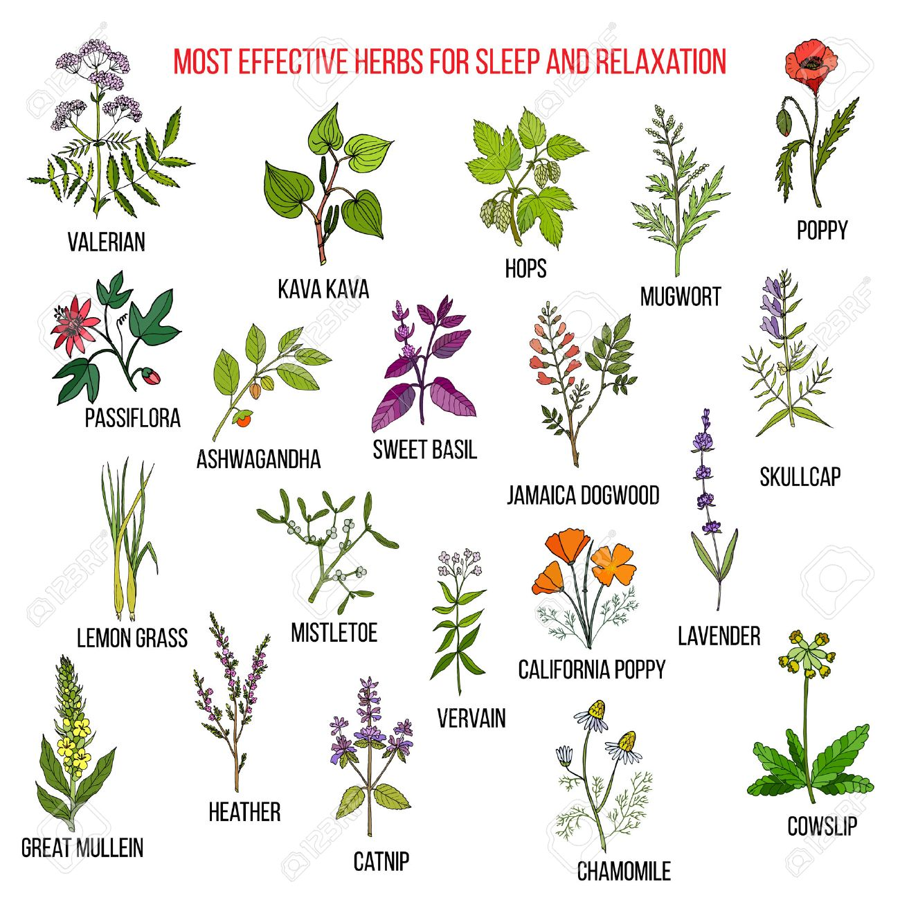 Best herbal remedies for sleep and relaxation - 74425595