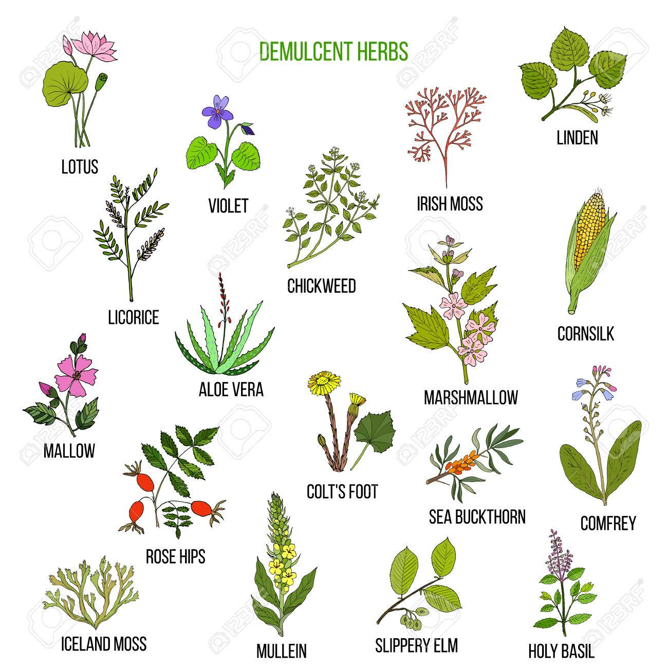 Demulcent herbs  Hand drawn vector set of medicinal plants