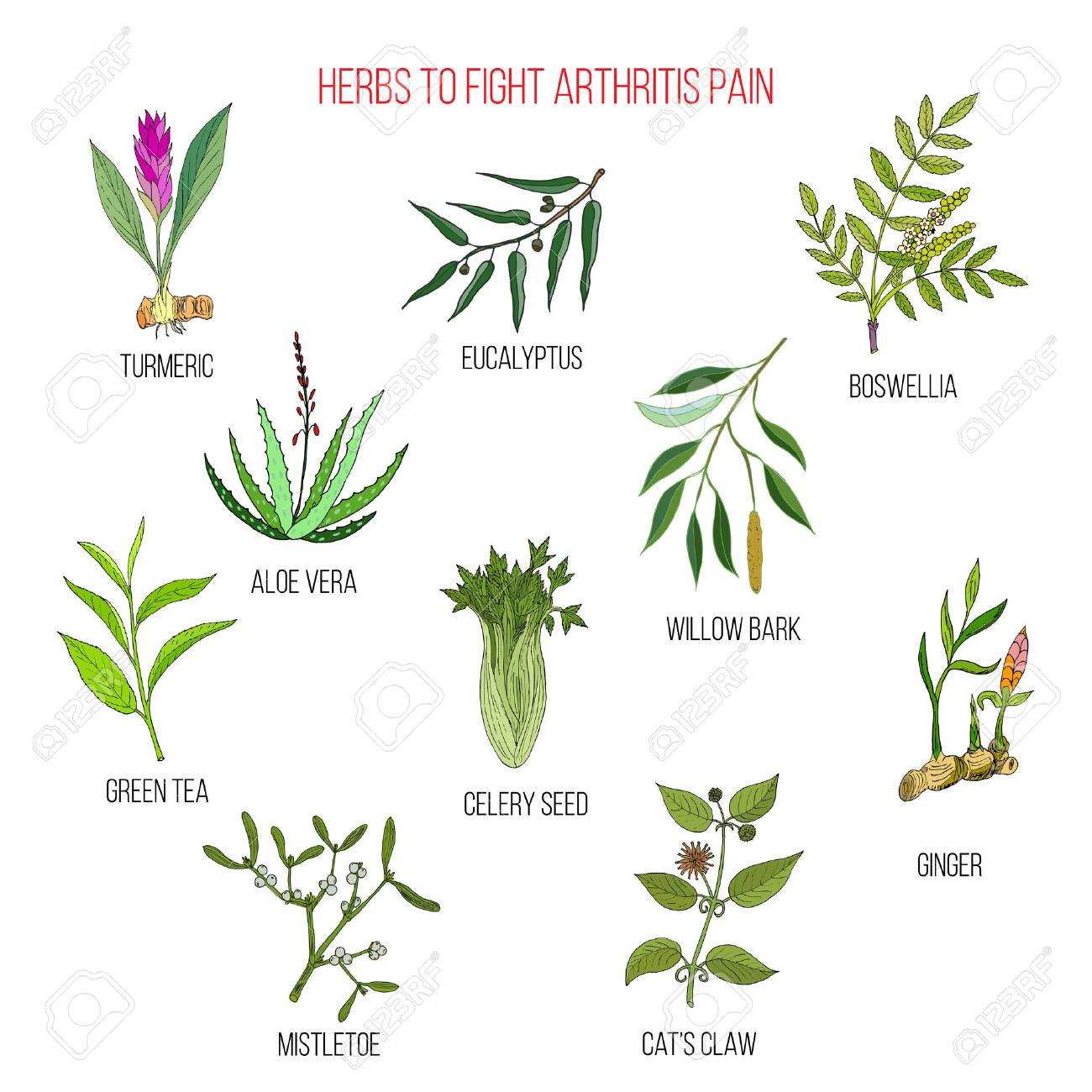 Herbs To Fight Arthritis Pain Turmeric Eucalyptus Boswellia Aloe Vera Willow