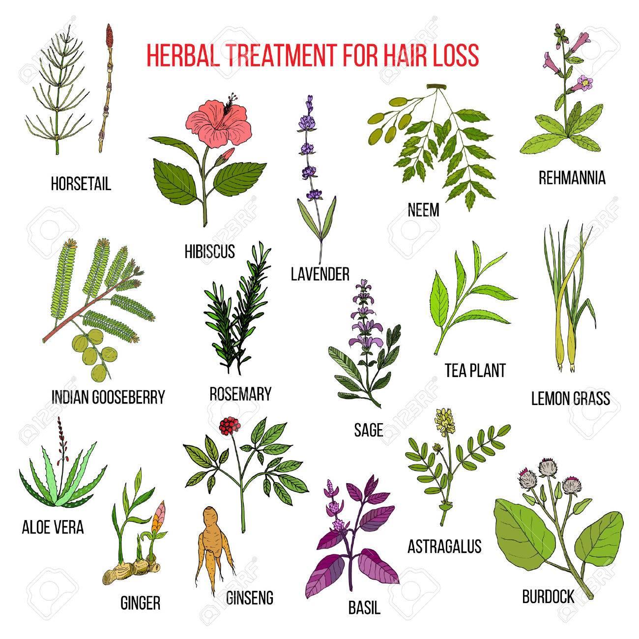 Hierbas Medicinales Para El Tratamiento De La Caída Del Cabello ...
