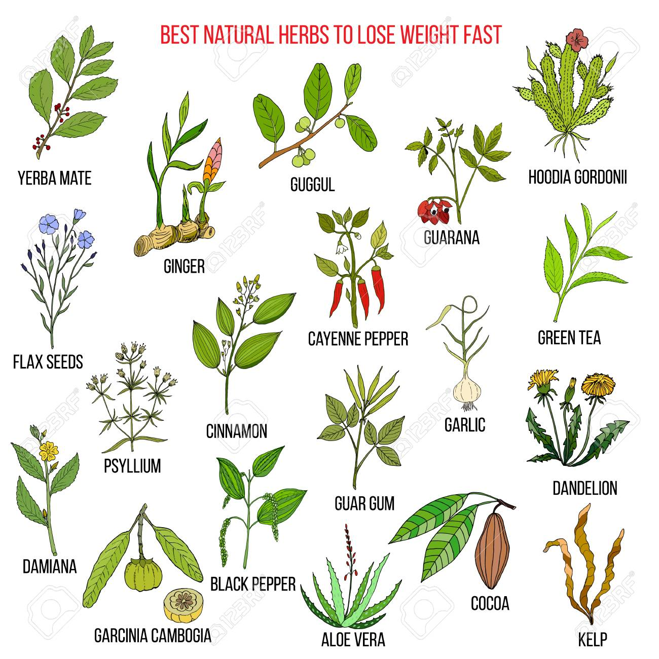Planta natural para bajar de peso