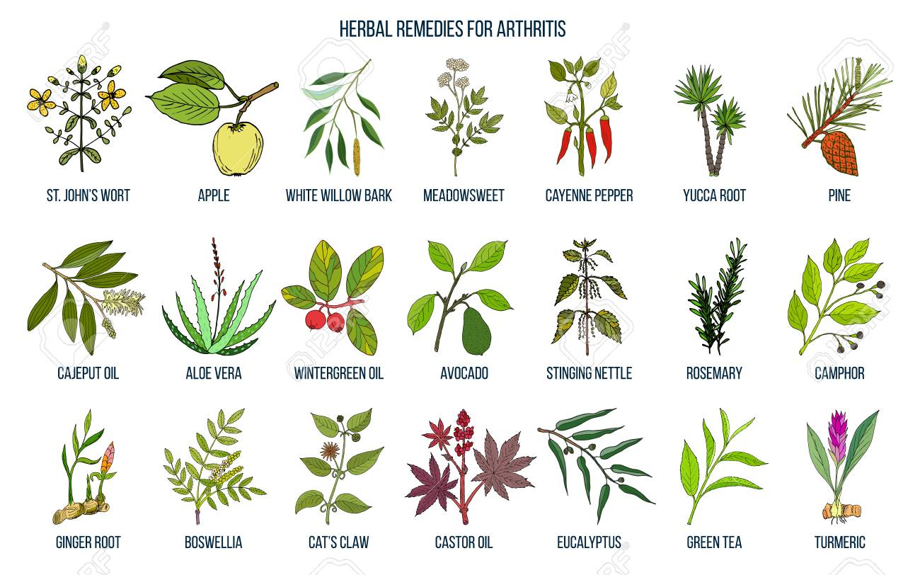 Best herbal remedies for arthritis Vector illustration. - 91965240