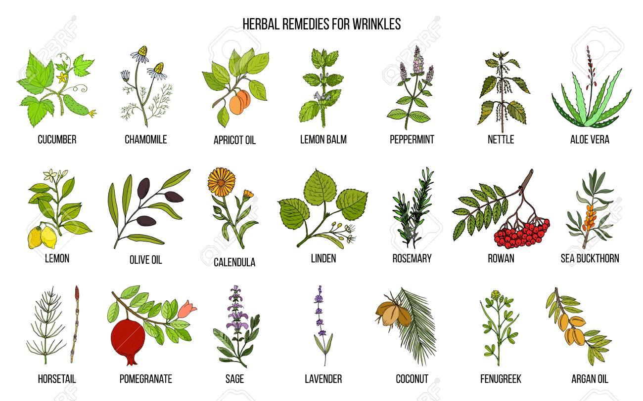 Best herbal remedies for wrinkles. Hand drawn vector set of medicinal plants - 92041077