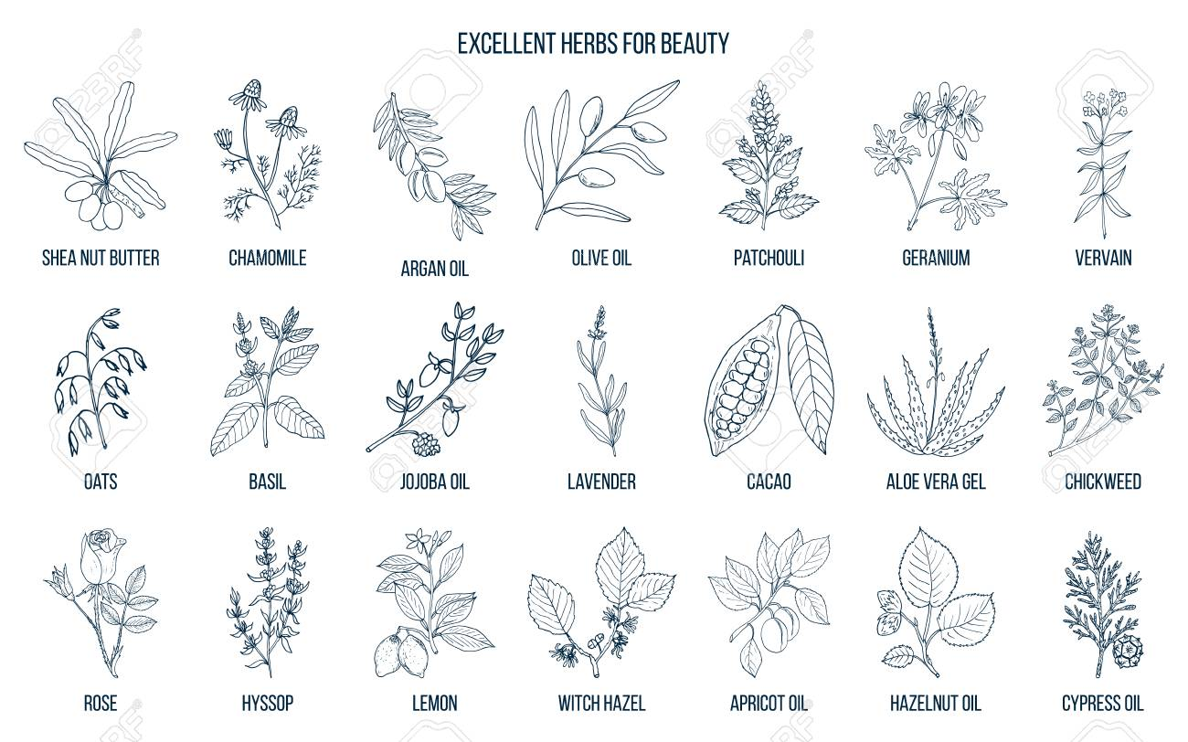 Best herbs for beauty. - 92137608