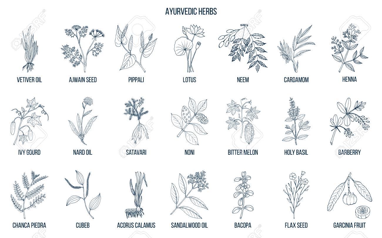 Ayurvedic herbs, natural botanical set. Hand drawn vector illustration - 94264669