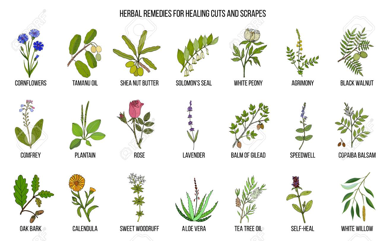 7090f023a5873 Herbal Remedies For Healing Cuts And Scrapes Vector Illustration ...