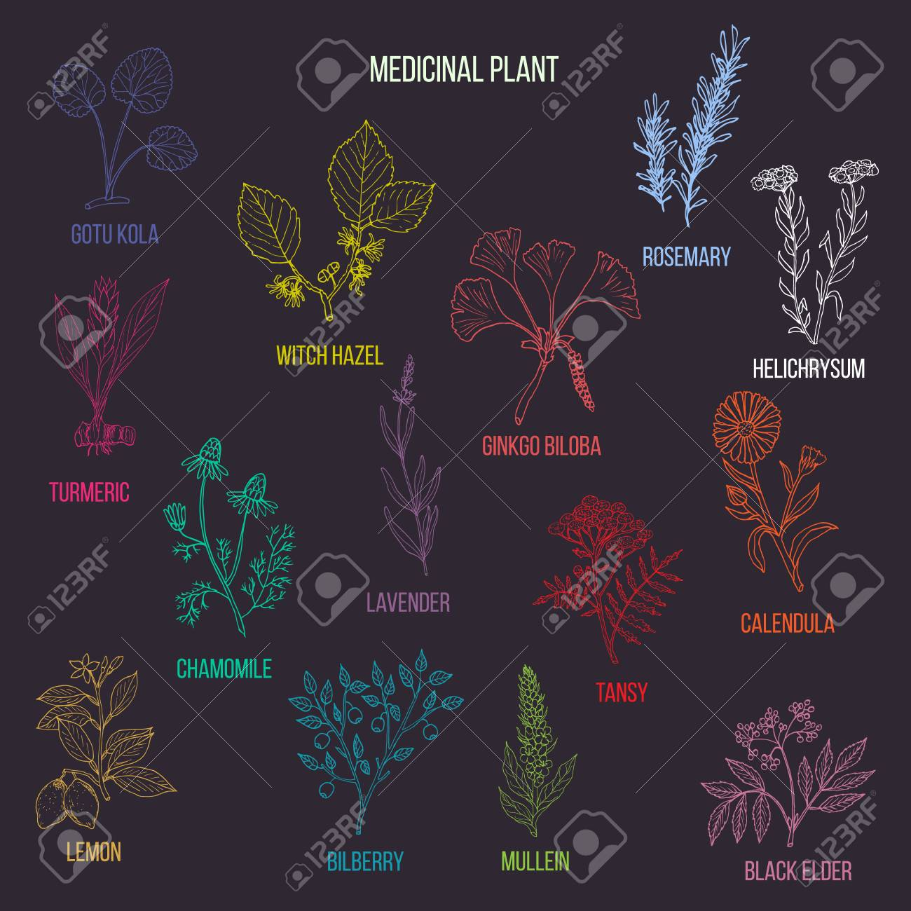 Vintage collection of hand drawn medical herbs and plants. Color version. Vector illustration - 113770247