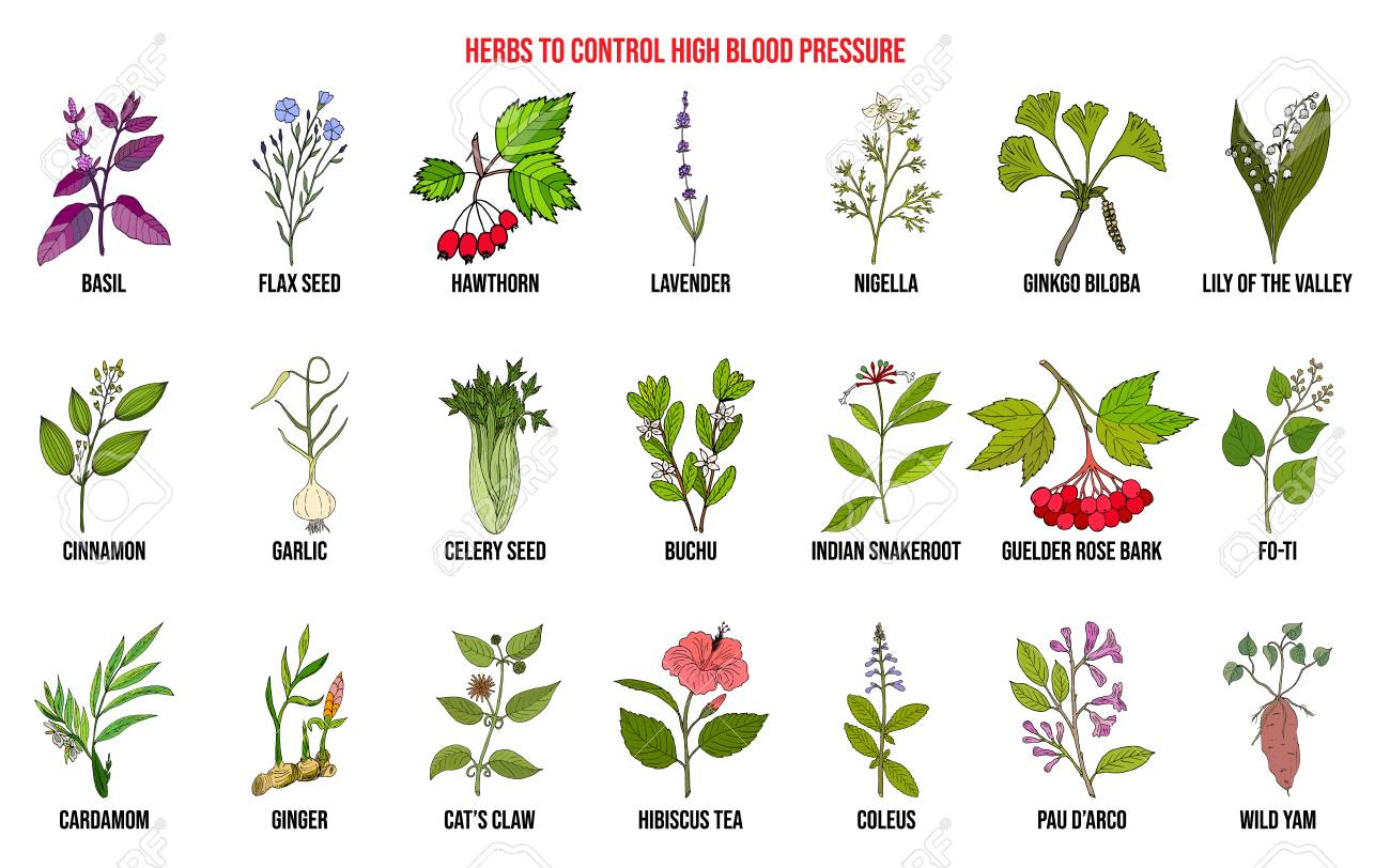 what herbs can lower blood pressure