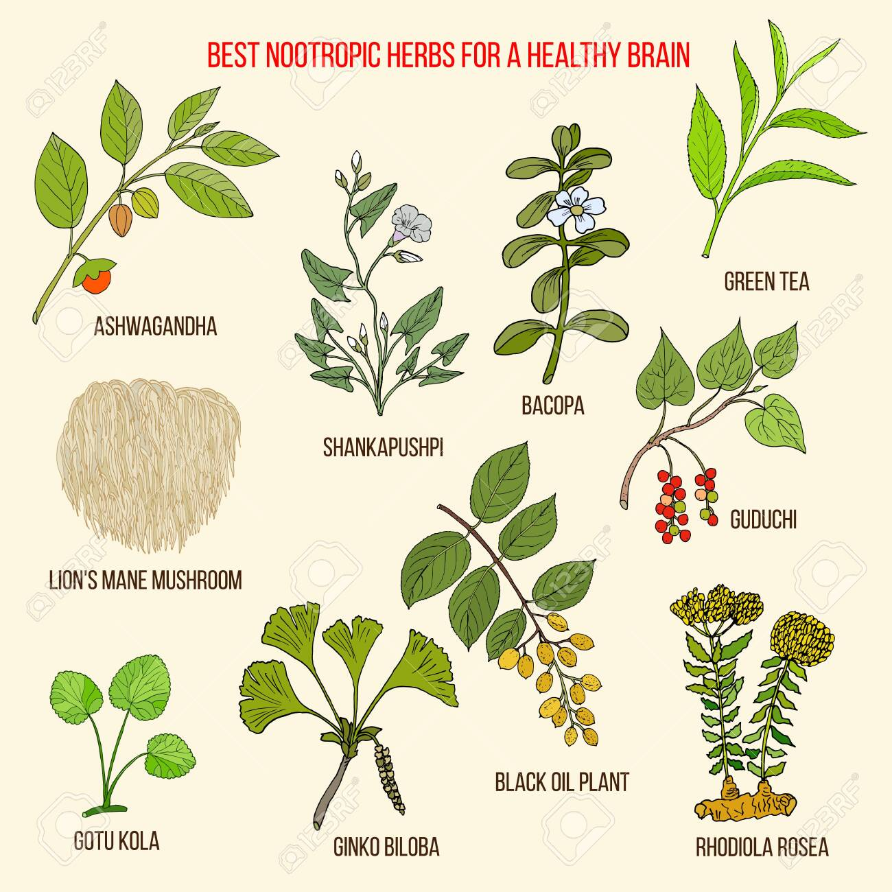 Best nootropic medicinal herbs for a healthy brain - 133566208