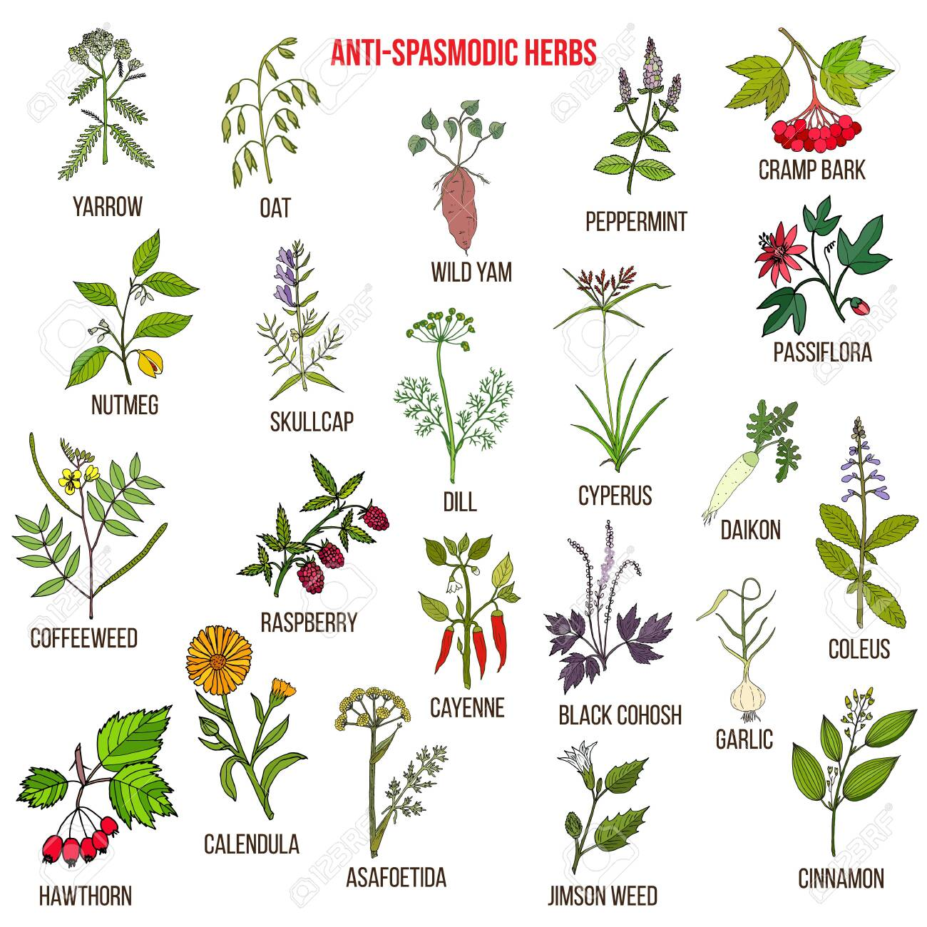 Best antispasmodic herbs collection. Part 2. Hand drawn vector set of medicinal plants - 151879097