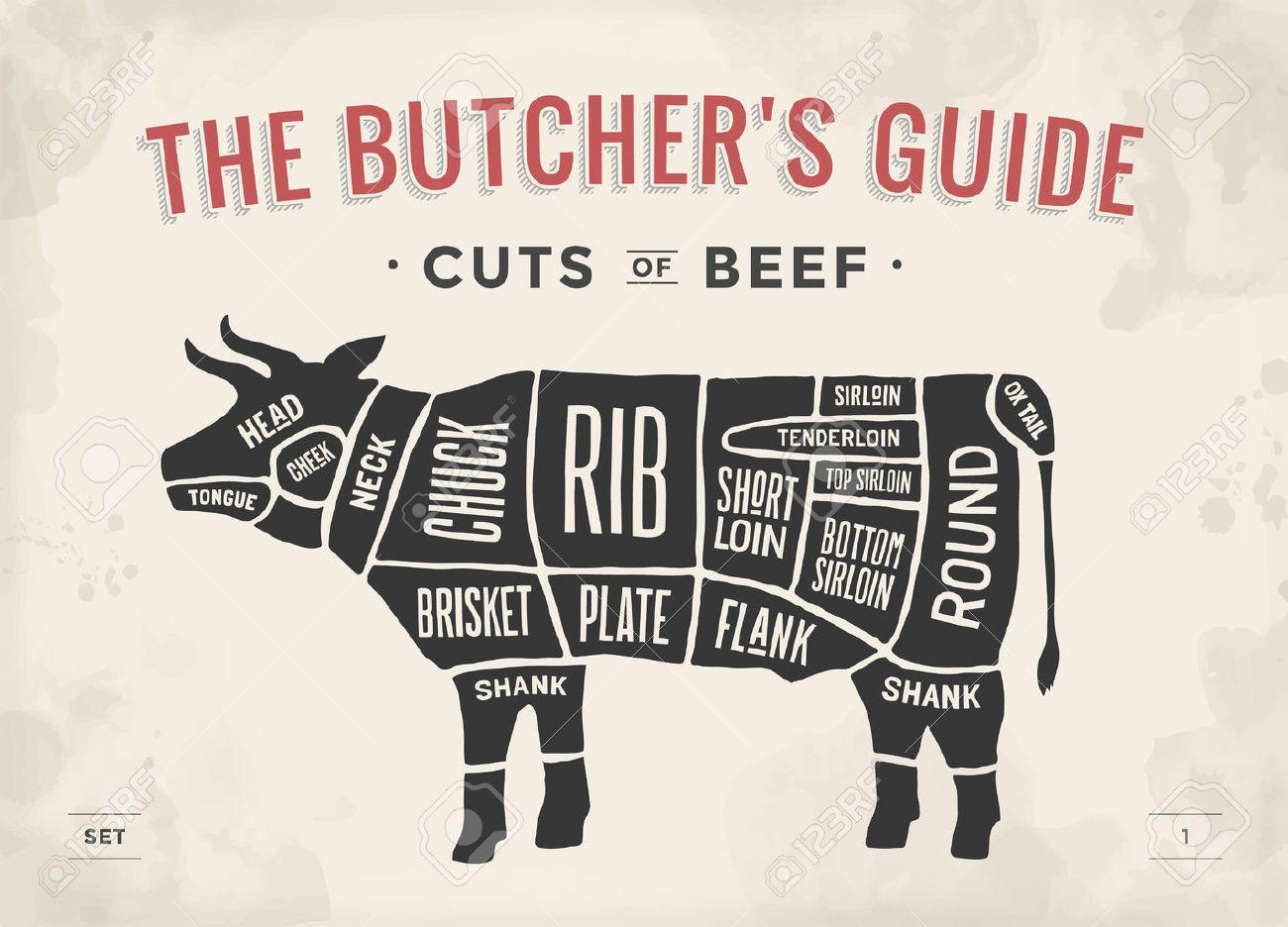 52471670 cut of beef set poster butcher diagram and scheme cow vintage typographic hand drawn vector illustra cut of beef set poster butcher diagram and scheme cow vintage