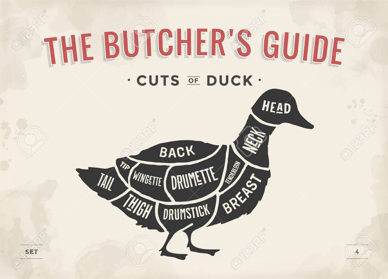 52581045 cut of meat set poster butcher diagram and scheme duck vintage typographic illustration duck cuts diagram trusted wiring diagrams \u2022
