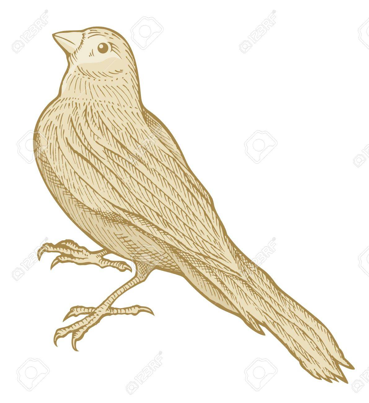 Bird sketch made with pen and ink isolated on white background colored with beige tones. - 10255305