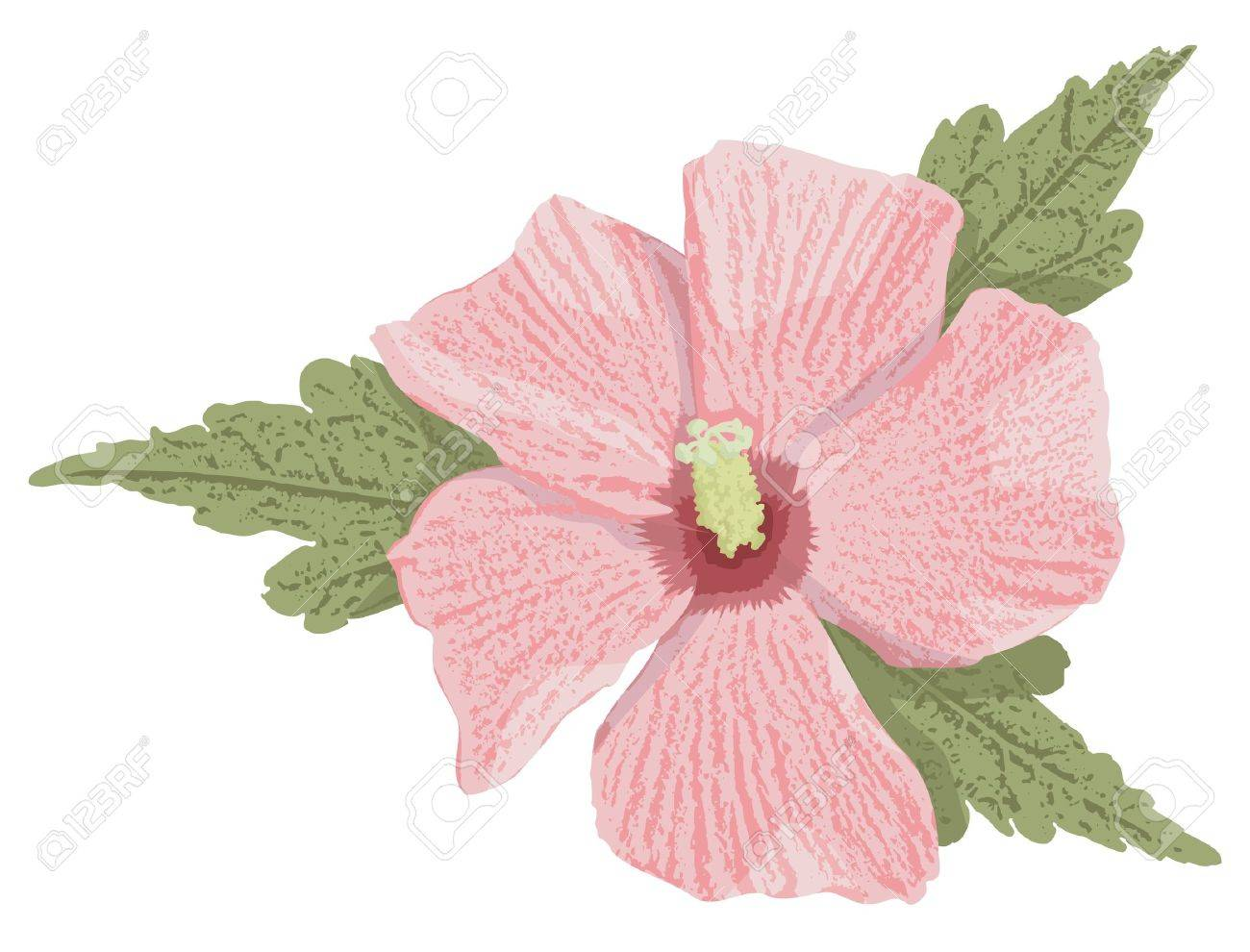Pink hibiscus flower with grunge shading isolated on white background. - 10411677