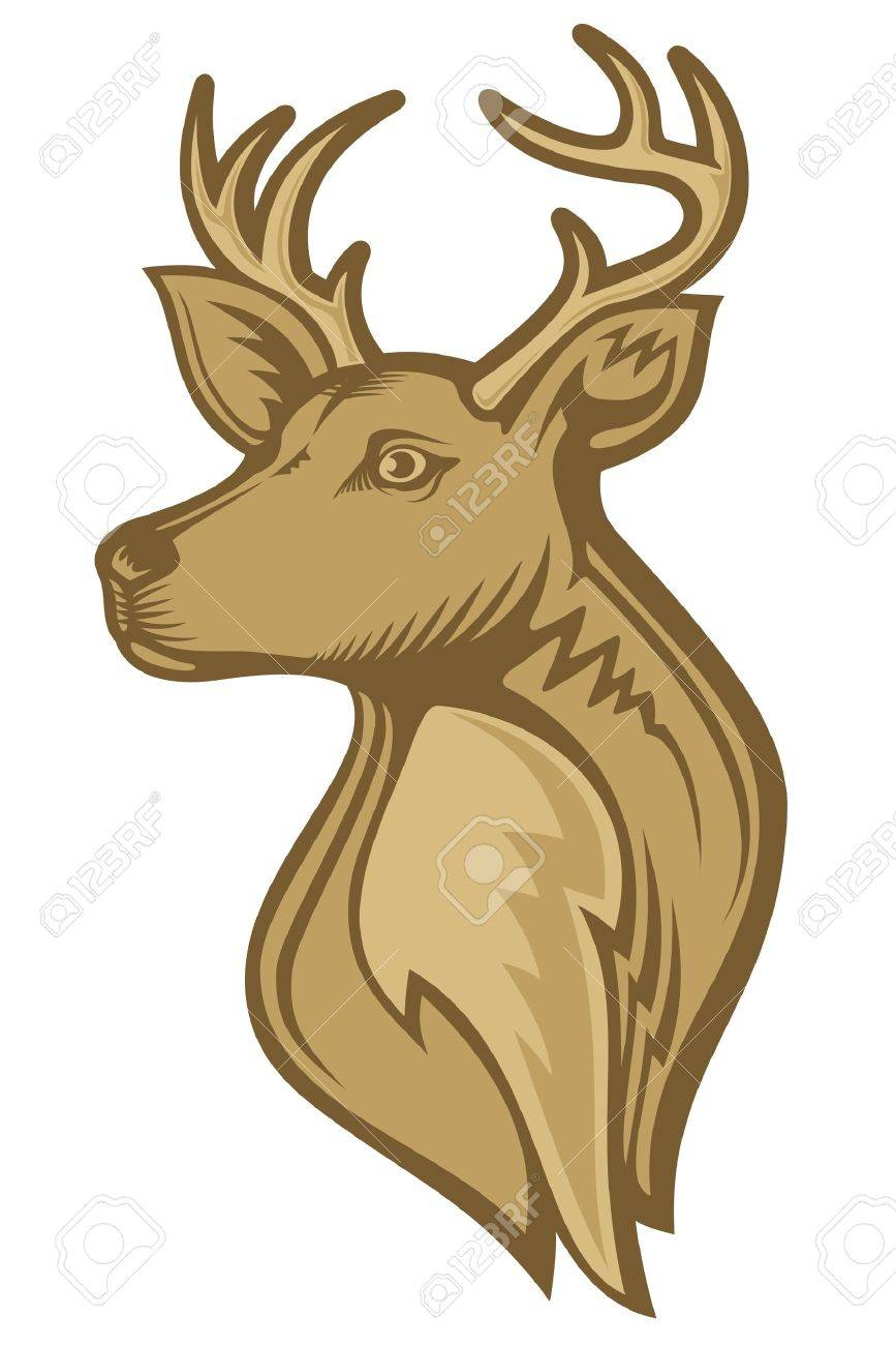 moose head stock photos u0026 pictures royalty free moose head images