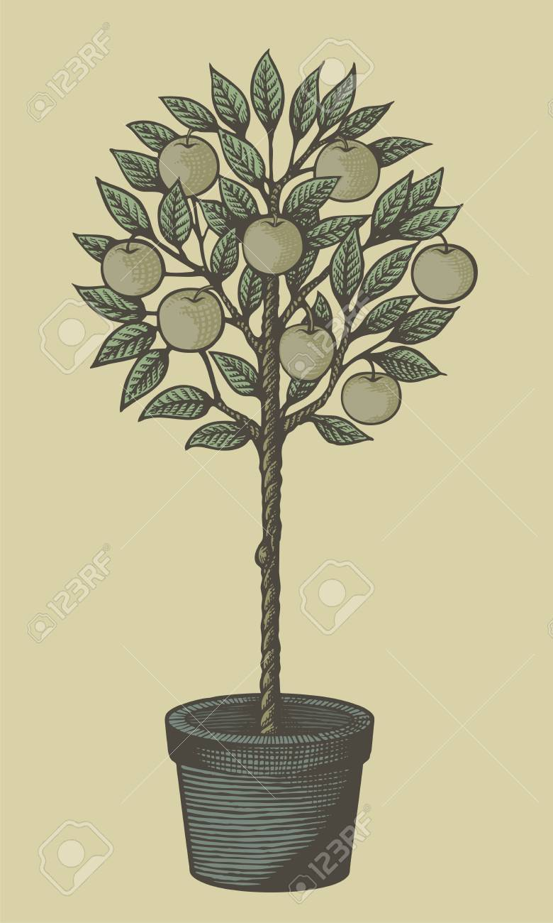 Woodcut style decorative apple tree in plant pot on tan background. - 13777204