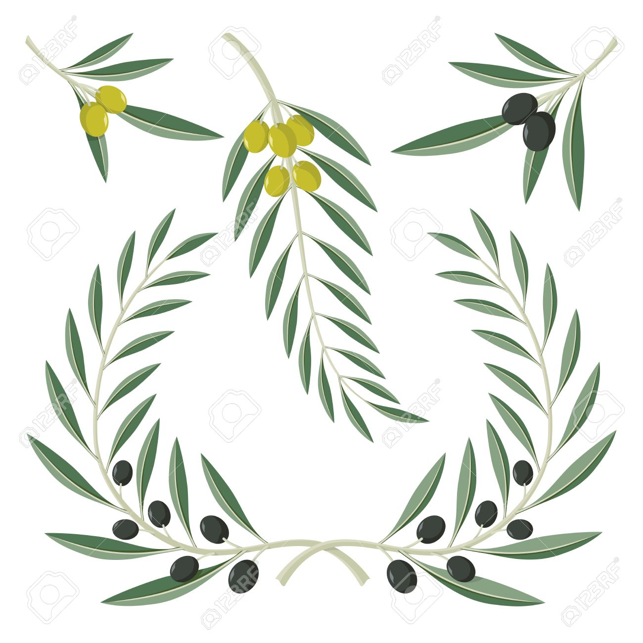 Various olive branches and wreath isolated on white background. - 19612099