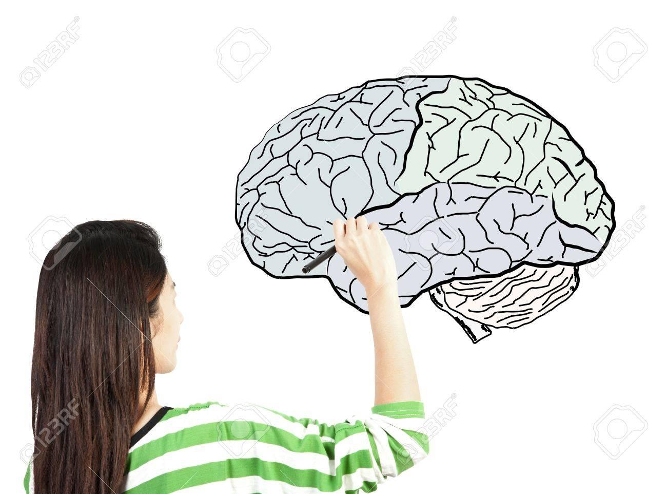 Fantastisch Gehirn Diagramm Bilder - Menschliche Anatomie Bilder ...