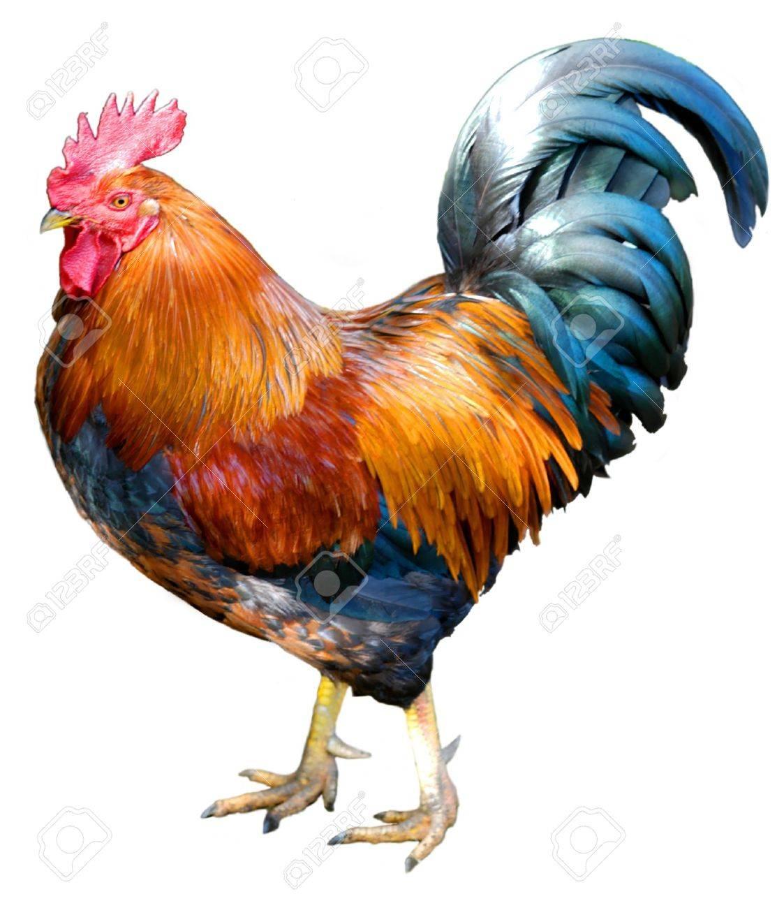3d cock photo pron clip