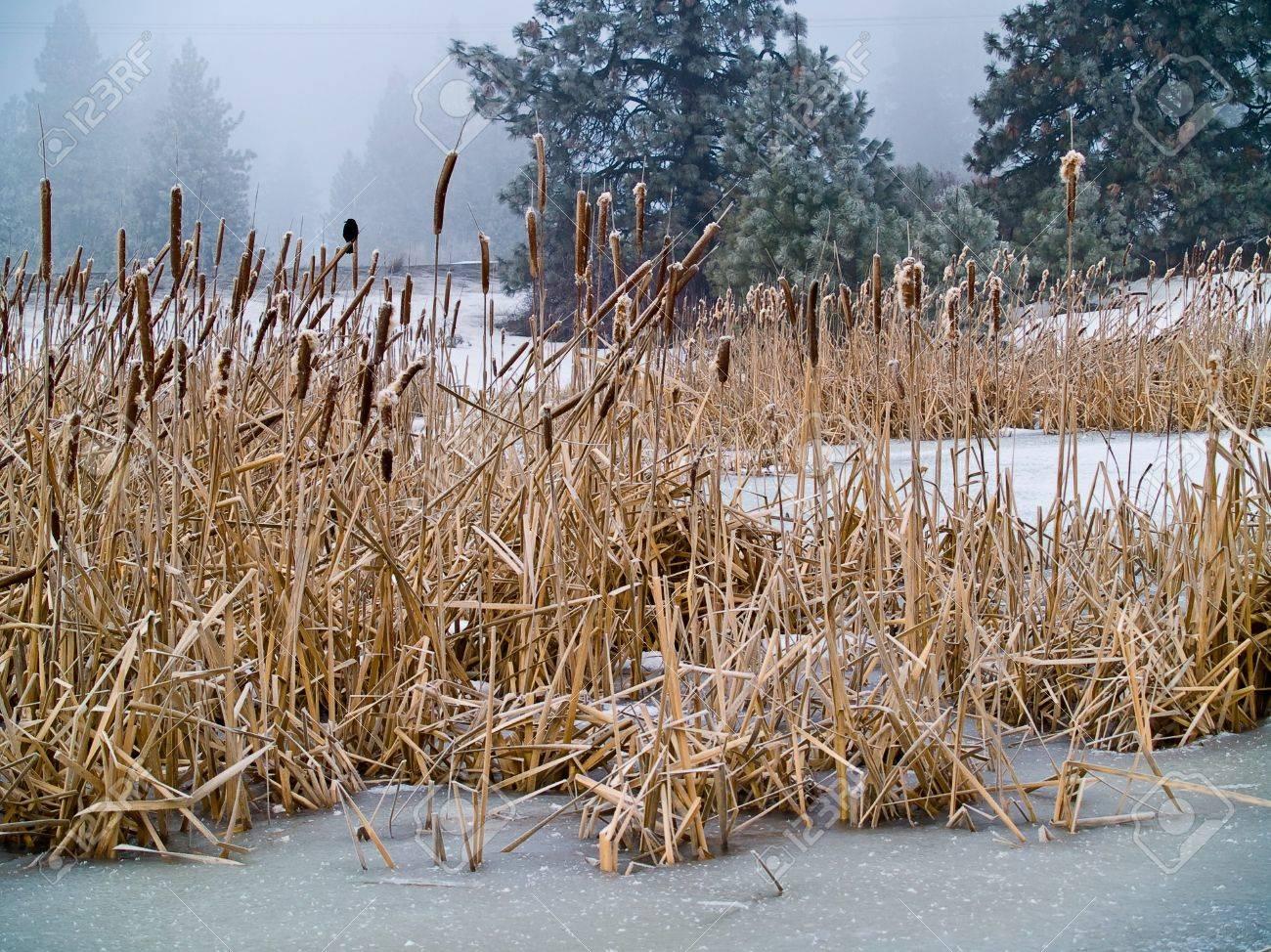 Frozen Marsh Area on an Overcast Day Stock Photo - 8275100