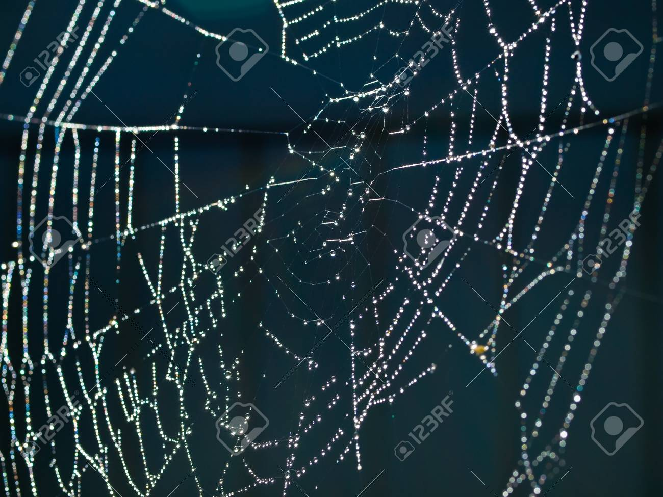 Spider Web Covered with Sparkling Dew Drops Stock Photo - 8275014