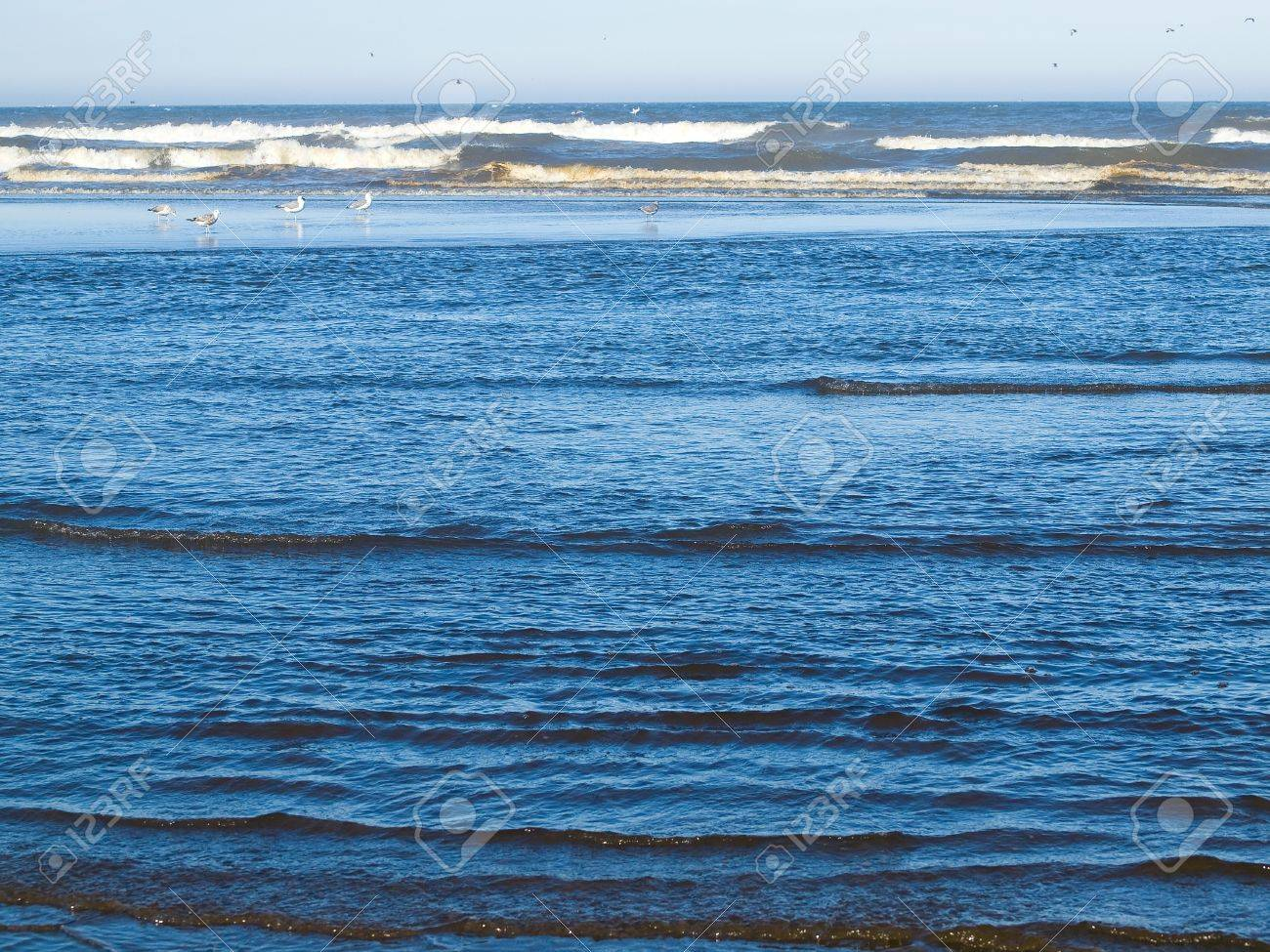 A Variety of Seabirds at the Seashore Featuring Pelicans Stock Photo - 17245920
