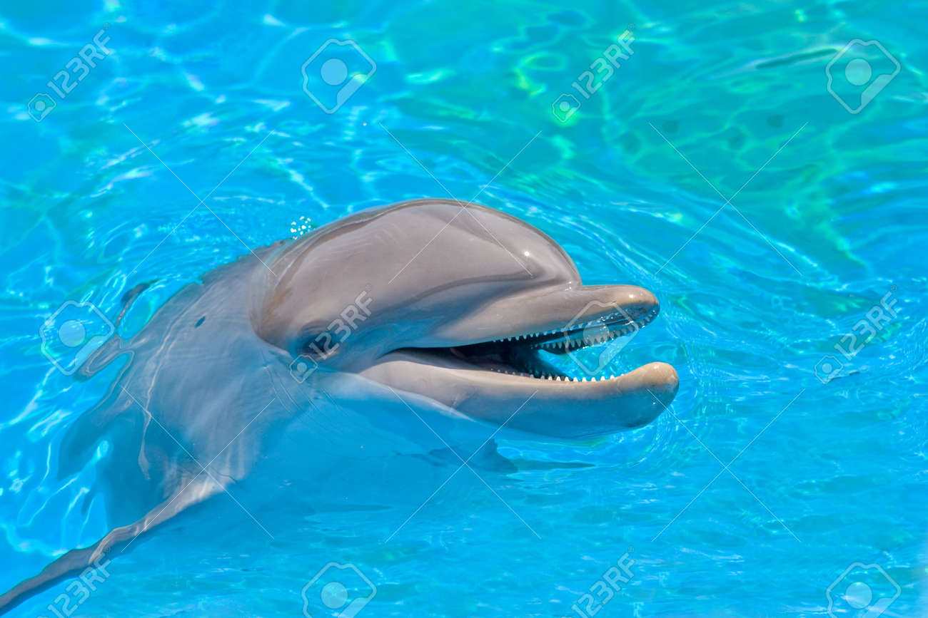 1000  images about Smiling Dolphins on Pinterest | Swim, Beautiful ...