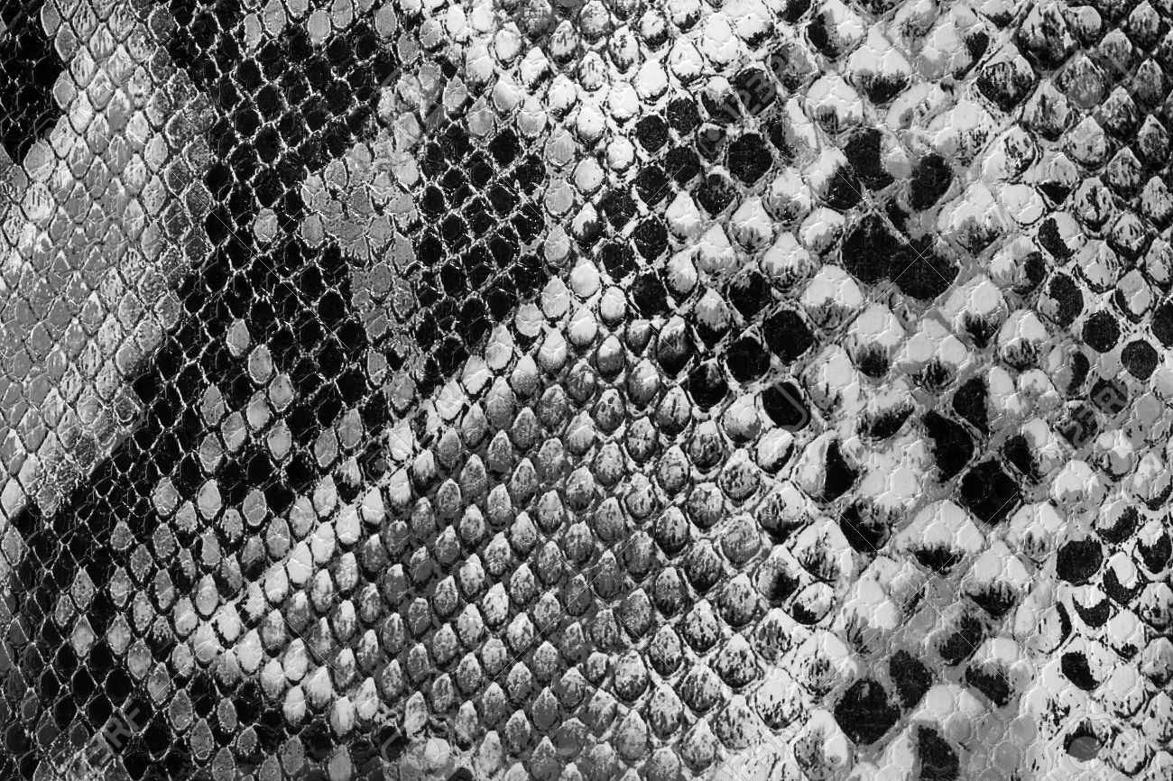 Black and white closeup on snakeskin textured snakeskin stock photo 17318006