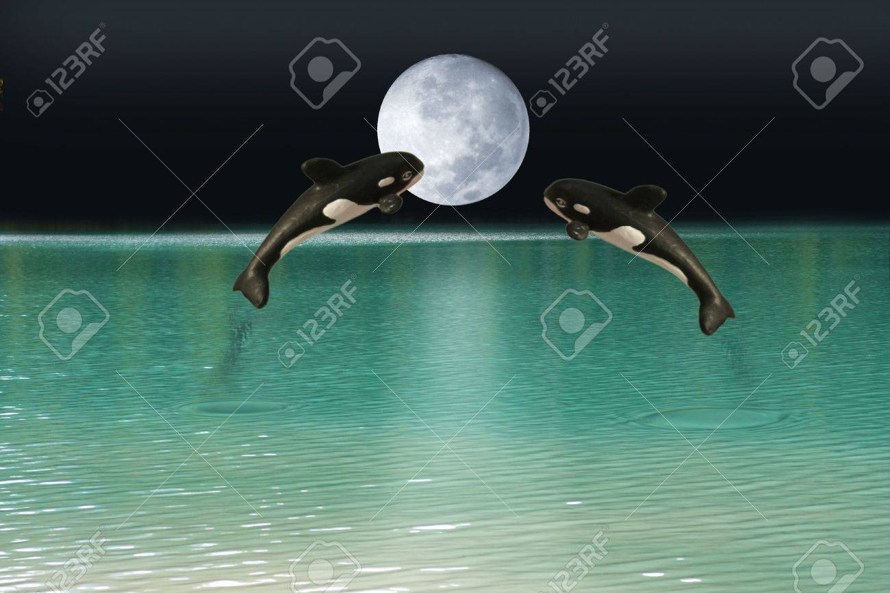 Killer whales over moon Stock Photo - 302490