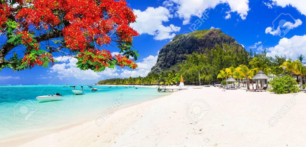 Beautiful Le Morne beach with traditional tree,Mauritius island. - 78159629