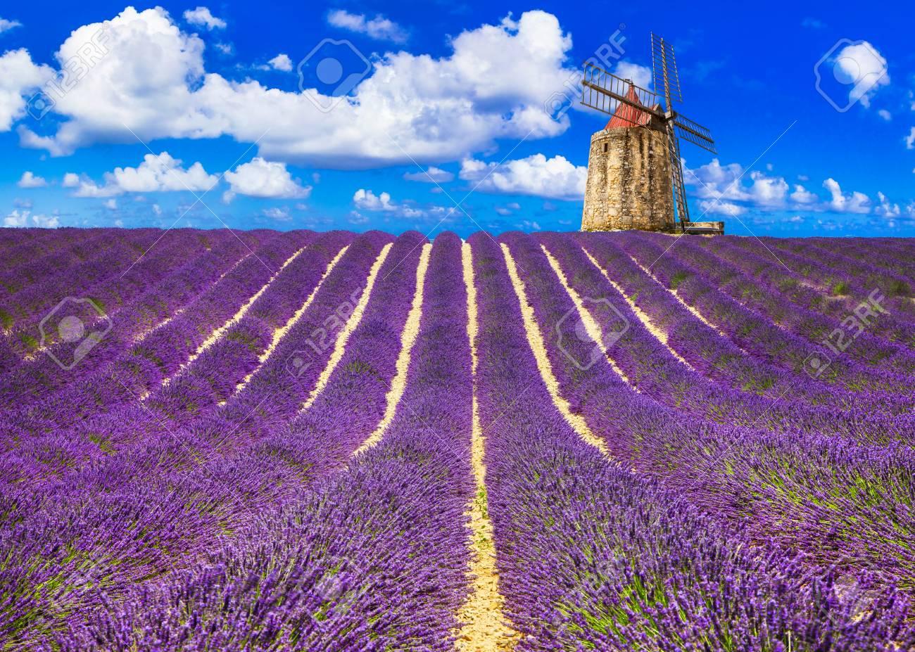 Impressive landscape, blooming lavander fields in Provance, France. - 81891409