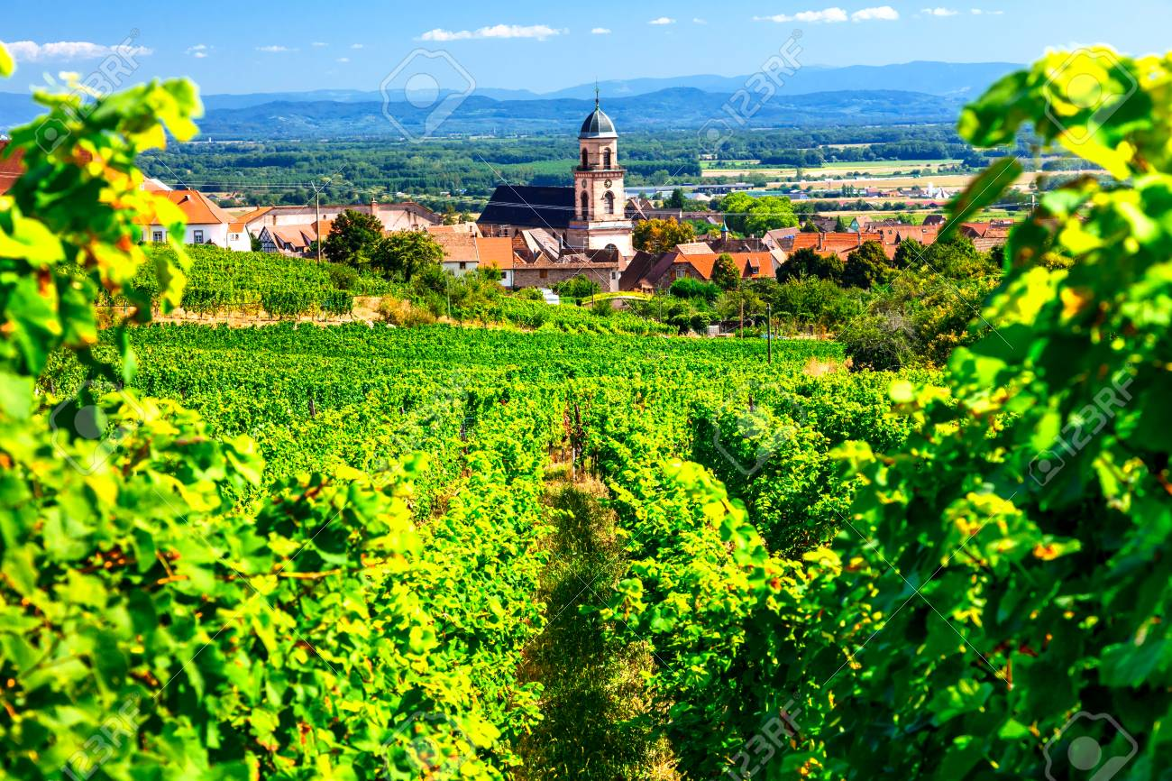 Picturesque Kayserberg village, Alsace region, view with vineyards, France. - 91120191