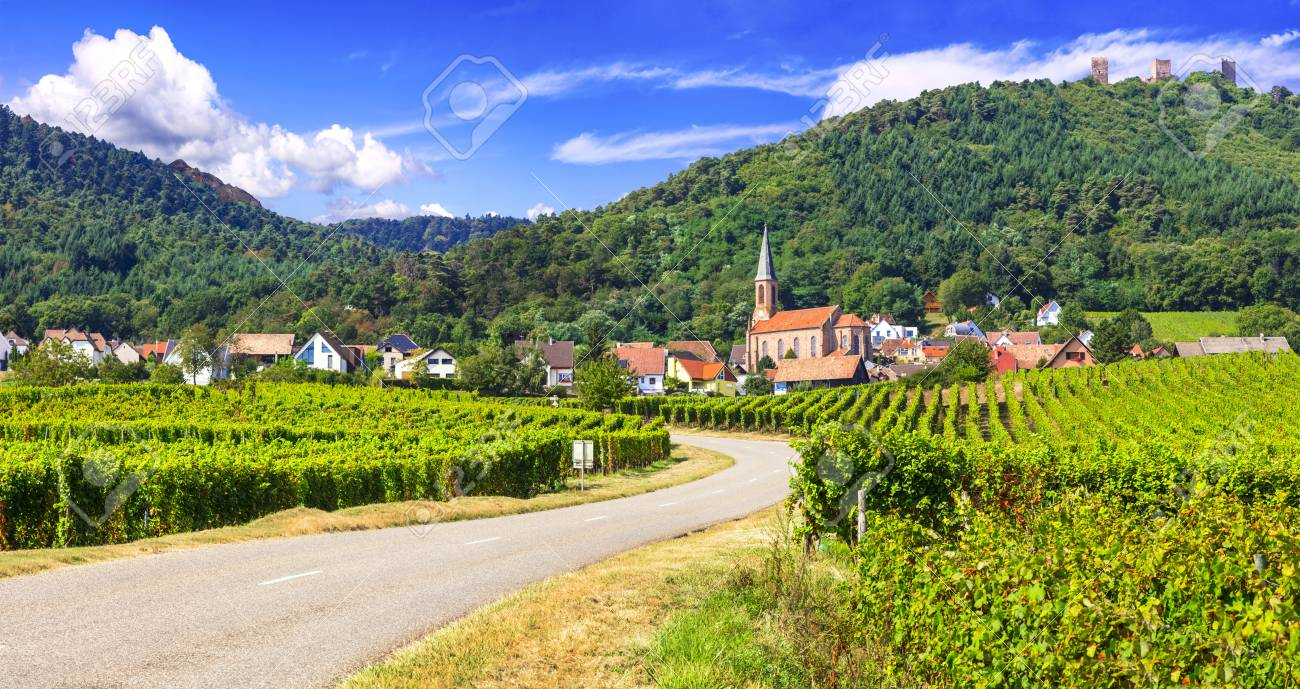 Traditional houses and vineyards in Kaysersberg village, Alsace, France - 121280344