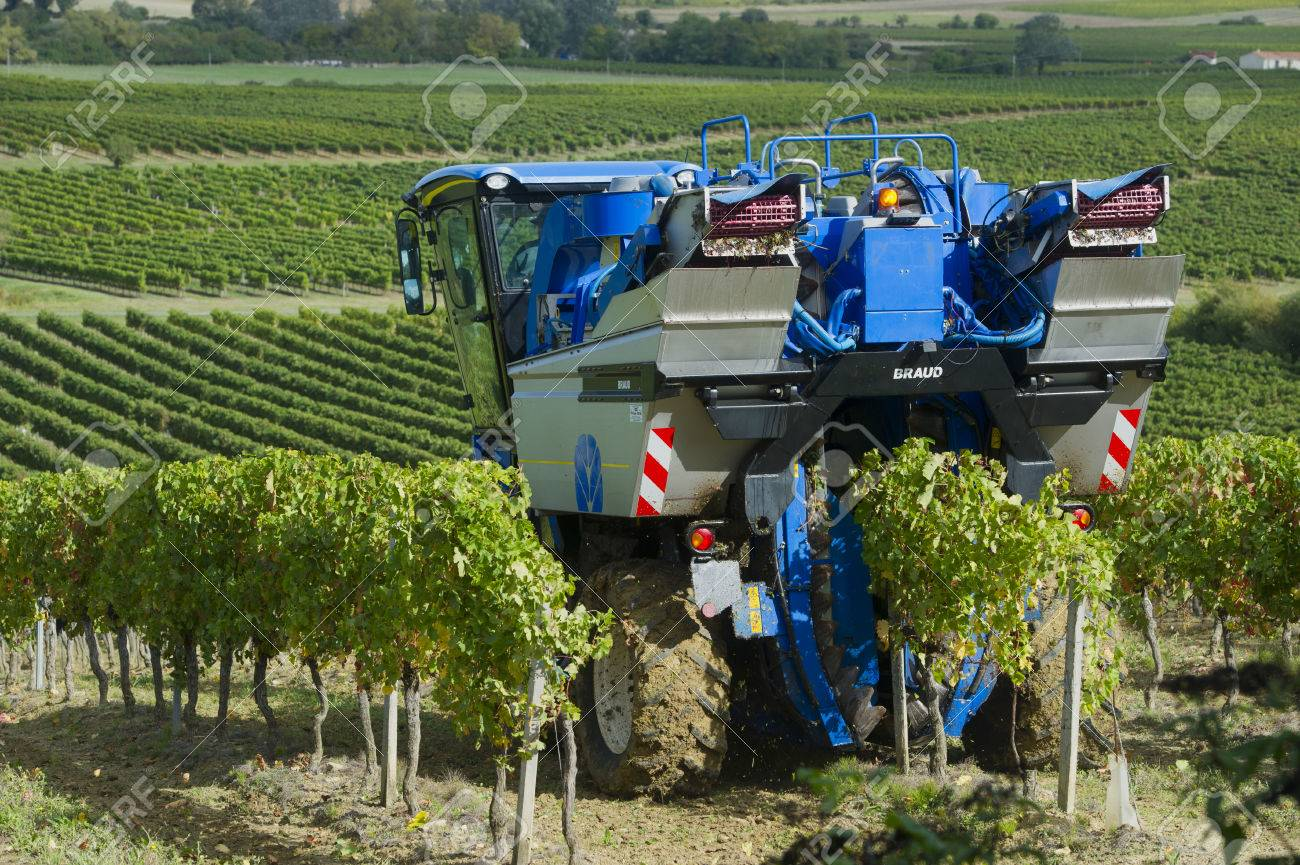 Mechanical harvesting of grapes in the vineyard Stock Photo - 23078059