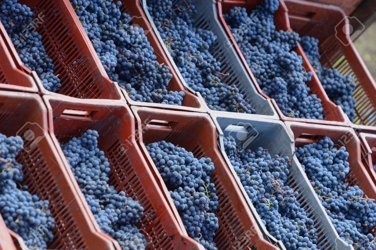 Bunch of red grapes in box Stock Photo - 24027259