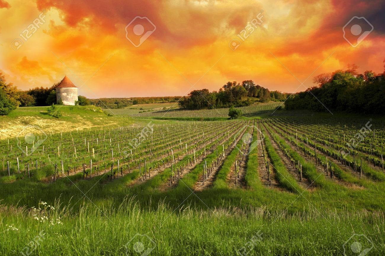 Vineyards of Saint Emilion, Bordeaux Vineyards Stock Photo - 30496031